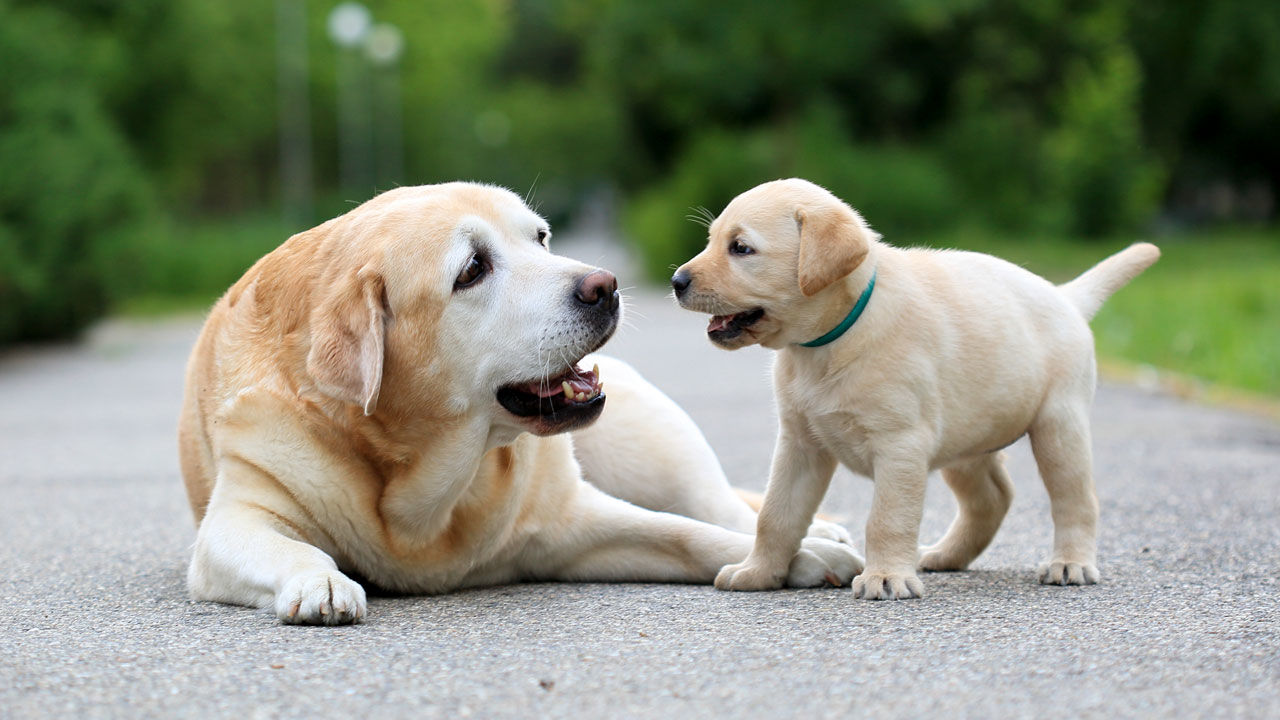Dogs WhatsApp Group Links