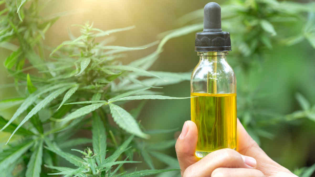 What is CBD oil Why so much fuss about this