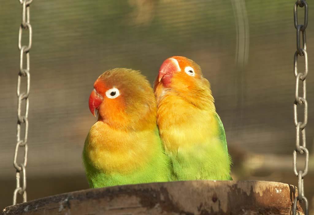 Love Birds WhatsApp Group Link